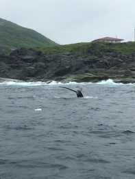 whale tail descending